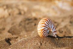 Snäckskal för skal för Nautiluspompiliushav på den svarta sandstranden, ö Arkivbild