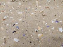 Snäckskal i havet Arkivbilder
