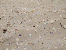 Snäckskal i havet Fotografering för Bildbyråer