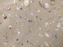 Snäckskal i havet Arkivfoto
