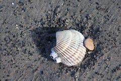 Snäckskal i sand Royaltyfri Bild