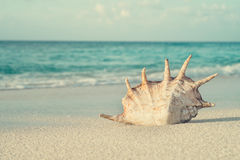 Snäckskal i sanden på bakgrund av havet Royaltyfria Foton