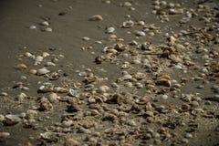 Snäckskal i sanden på Blacket Sea, Rumänien arkivfoto