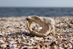 Snäckskal i strand Arkivbild