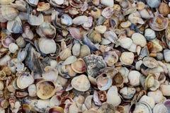 Snäckskal i stranden Arkivbilder