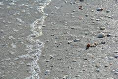 Snäckskal och hav på en Florida strand Arkivfoton