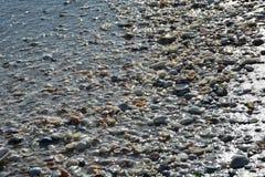 Snäckskal och hav på en Florida strand Royaltyfria Foton