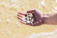 Snäckskal och koraller Arkivfoto