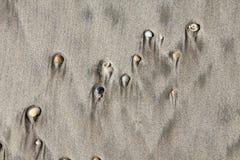 Snäckskal och sand Fotografering för Bildbyråer
