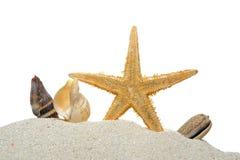Snäckskal och sjöstjärna Royaltyfri Foto