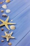 Snäckskal och sjöstjärna Arkivbild