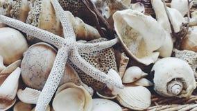 Snäckskal och sjöstjärna Arkivfoton