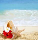 Snäckskal och sjöstjärna med tropiska blommor på den sandiga stranden arkivbild