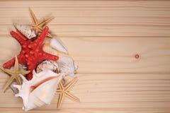 Snäckskal och sjöstjärna på en träbakgrund Royaltyfria Bilder