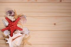 Snäckskal och sjöstjärna på en träbakgrund Royaltyfri Bild
