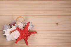 Snäckskal och sjöstjärna på en träbakgrund Royaltyfria Foton