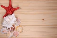 Snäckskal och sjöstjärna på en träbakgrund Arkivbild