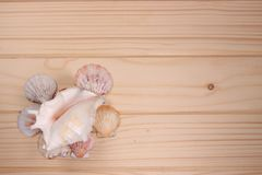 Snäckskal och sjöstjärna på en träbakgrund Royaltyfri Fotografi