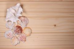 Snäckskal och sjöstjärna på en träbakgrund Arkivfoton