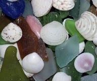 Snäckskal och strandexponeringsglas Arkivbild