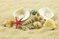 Snäckskal pärla, sjöstjärna på sandferie Royaltyfri Foto