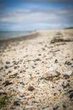 Snäckskal på Coral Beach i Claigan på ön av Skye i Skottland Royaltyfri Bild