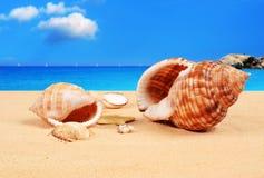 Snäckskal på den sandiga stranden Arkivbild