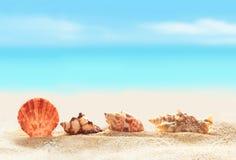 Snäckskal på den sandiga stranden Royaltyfria Foton