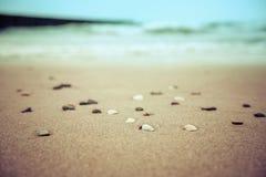 Snäckskal på den suddiga sommarbakgrunden för sandig strand arkivbild