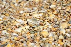Snäckskal på en sommar sätter på land och sandpapprar som bakgrund S royaltyfri fotografi