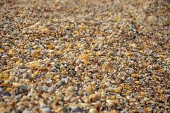 Snäckskal på en sommar sätter på land och sandpapprar som bakgrund S arkivbilder