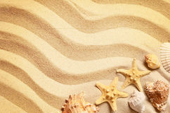Snäckskal på en sommar sätter på land och sandpapprar som bakgrund det fästande ihop isolerade banahavet shells white arkivfoton