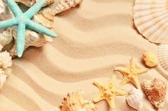 Snäckskal på en sommar sätter på land och sandpapprar som bakgrund det fästande ihop isolerade banahavet shells white royaltyfri fotografi