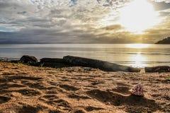 Snäckskal på en strand Arkivbild