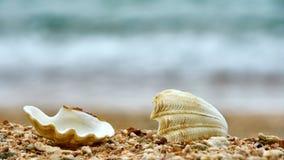 Snäckskal på en strand av Ko Tao Fotografering för Bildbyråer