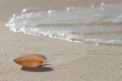 Snäckskal på en vit sand Arkivbild