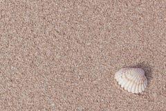 Snäckskal på gul strandsand Arkivfoto