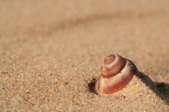 Snäckskal på guld- sand Arkivbild