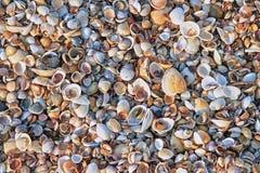 Snäckskal på havskusten arkivfoto