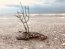 Snäckskal på havstranden arkivbilder