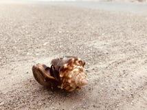 Snäckskal på havstranden royaltyfri fotografi