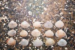 Snäckskal på kiselstenar för ett bakgrundshav Arkivfoton