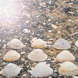 Snäckskal på kiselstenar för ett bakgrundshav Royaltyfria Bilder