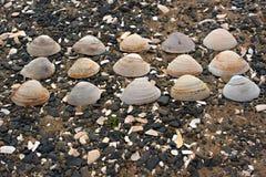 Snäckskal på kiselstenar för ett bakgrundshav Royaltyfri Foto
