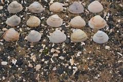 Snäckskal på kiselstenar för ett bakgrundshav Fotografering för Bildbyråer