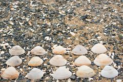 Snäckskal på kiselstenar för ett bakgrundshav Royaltyfria Foton