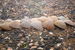 Snäckskal på kiselstenar för ett bakgrundshav Arkivbilder