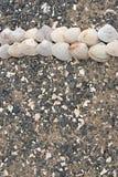 Snäckskal på kiselstenar för ett bakgrundshav Royaltyfri Bild