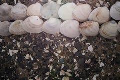 Snäckskal på kiselstenar för ett bakgrundshav Arkivbild