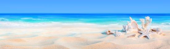 Snäckskal på kusten Arkivbilder